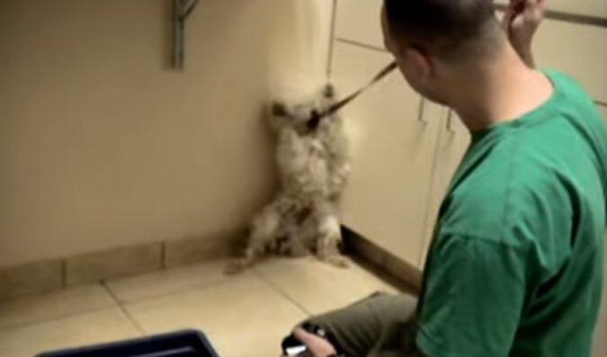 Zobacz co zrobił ten przerażony pies, gdy zdał sobie sprawę, że nie grozi mu niebezpieczeństwo