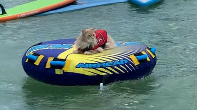 Dlaczego on, a nie ja? Wszyscy zazdrościli kotu wakacji nad morzem. Wideo