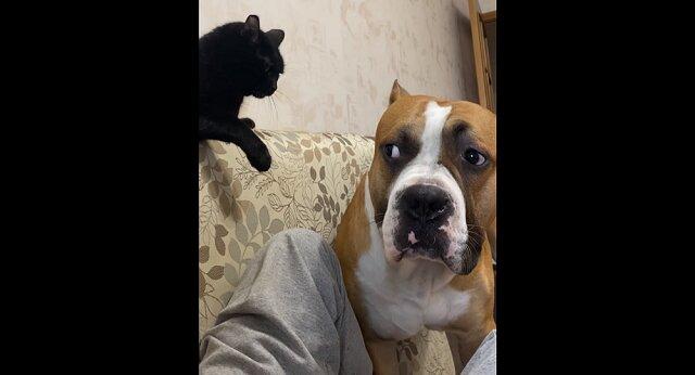 Pies wyładował całą nagromadzoną złość na wrednym kocie - zabawny filmik