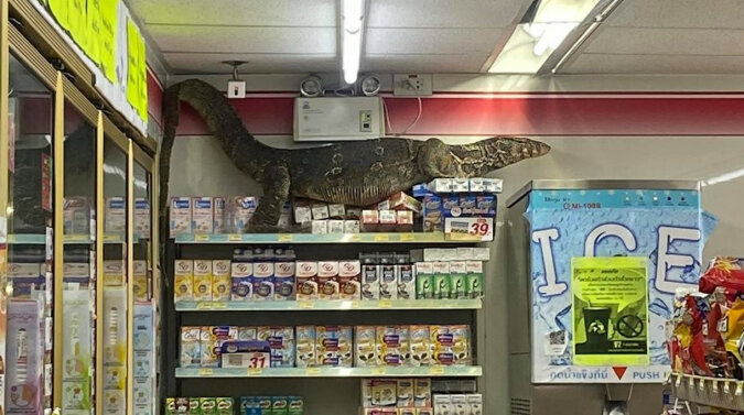 Potrzebujesz torby? Ogromny waran przyszedł do sklepu i przestraszył klientów. Wideo