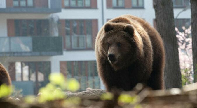 Pies ostrzegł właścicieli przed inwazją niedźwiedzi za pomocą jednej sprytnej umiejętności