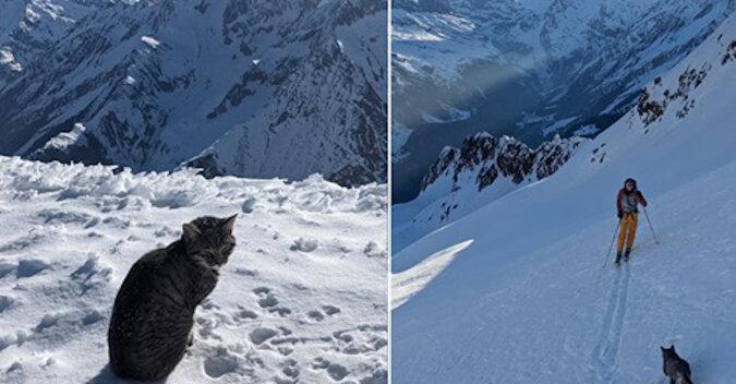Alpiniści wspięli się na górę i byli zaskoczeni, widząc tam kota domowego