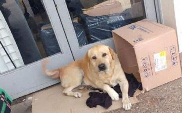 Pewien wierny labrador siedział przy drzwiach szpitala przez 7 dni, czekając na swojego pana