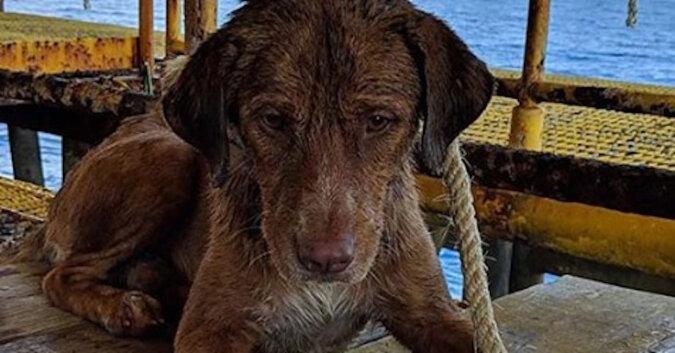 Wiertniczy cudem uratowali psa znajdującego się w morzu, 200 km od wybrzeża