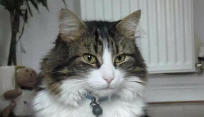 Rodzina pochowała kota, a on wrócił po 3 tygodniach