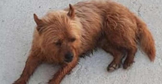 Pies zaczął często uciekać z domu, ale nikt go za to nie karci