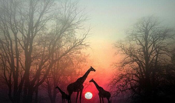 Zatrzymaj się na chwilę i pozwól swojej duszy Cię dogonić: piękna afrykańska przypowieść