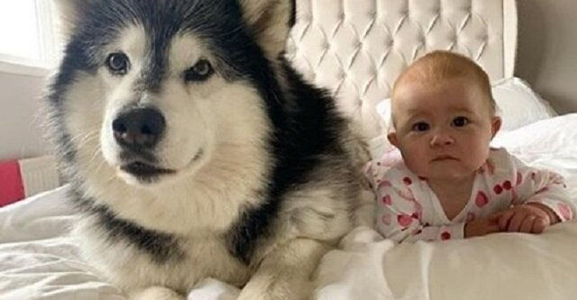 Historia o tym, jak dwa psy i kot poznali noworodka