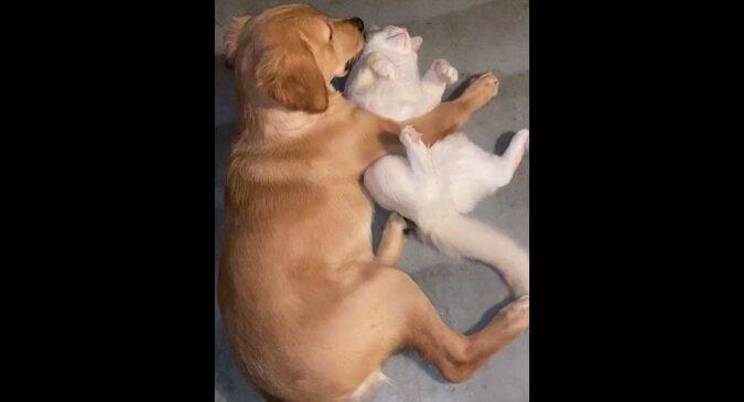 Pies przyłapał szczeniaka z kotem na słodkich uściskach. Film przedstawiający zabawną reakcję futrzastego