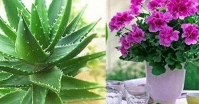 Cztery propozycje roślin doniczkowych, które powinni znaleźć się w każdym domu