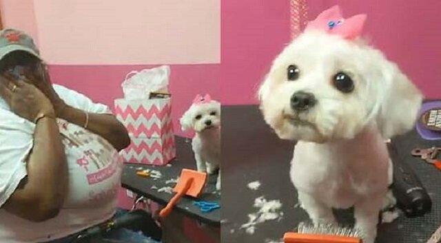 Bardzo emocjonalna reakcja fryzjerki na oferowanego jej psa