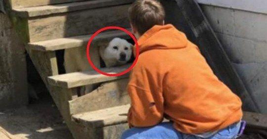Opuszczony pies trzęsie się ze strachu, a ratownicy płaczą. Zobacz co się dzieje dalej