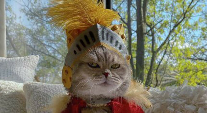 Bezpański kot znalazł nowy dom i podbija sieć modnymi strojami