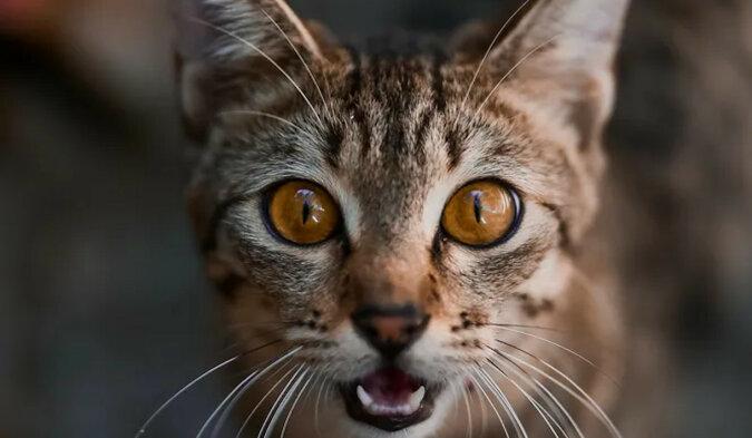 """""""Serce pęka"""". Właściciel umieścił ukrytą kamerę, aby śledzić koty"""