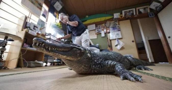 Prawdziwy krokodyl od 39 lat mieszka w rodzinie z Japonii