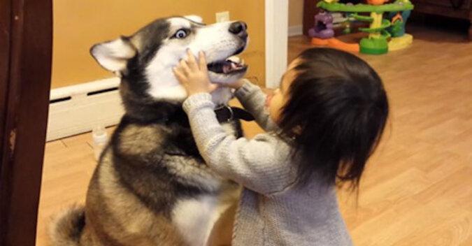 Reakcja husky na pocałunki dziecka rozśmieszyła cały Internet. Wideo