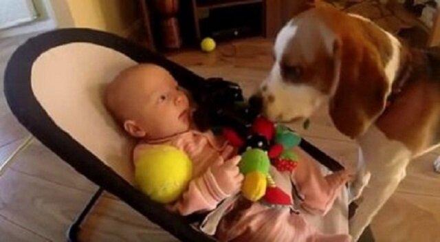 Pies ukradł dziecku zabawkę, jednak chwilę później poczuł się winny… a jego przeprosiny są niesamowite