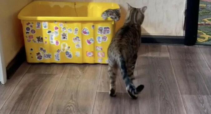 Kotka zmęczona kociętami rozśmieszyła sieci społecznościowe. Wideo