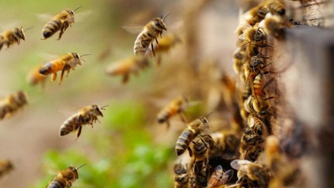 Pszczoły stały się zbyt mądre: wideo z butelką zaskoczyło
