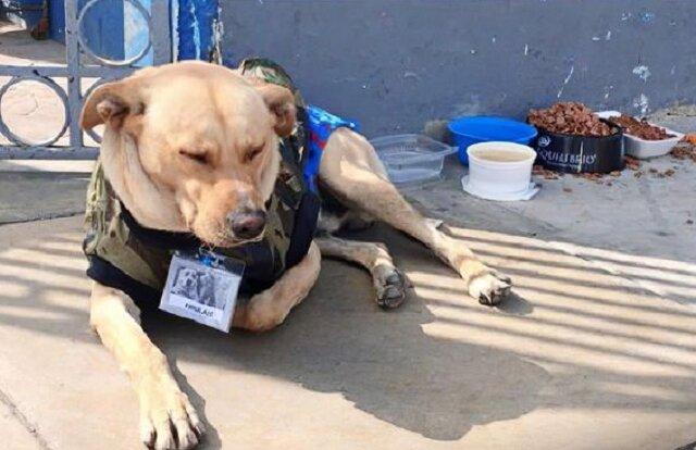 Oddany pies nie odchodził od budynku szpitala przez kilka dni, chciał zaczekać na właściciela
