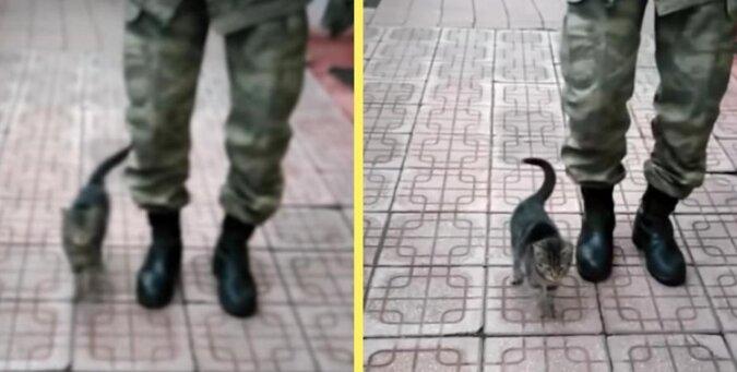 Kotek mieszkający w bazie wojskowej nauczył się maszerować