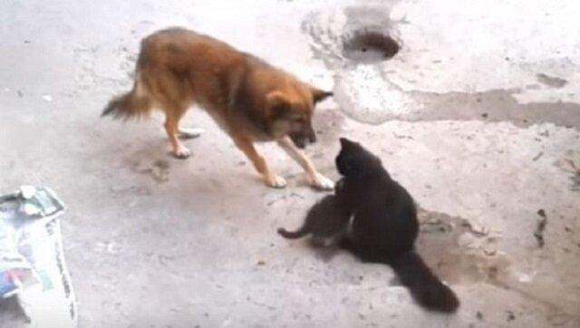 Pies podszedł do kociej mamy z małymi. Zobacz co stało się później