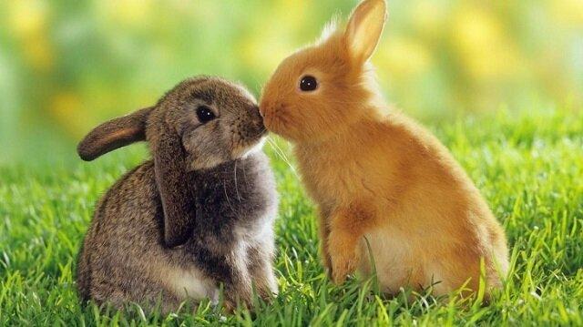 One też potrafią kochać. Najbardziej wzruszające zdjęcia zakochanych zwierząt