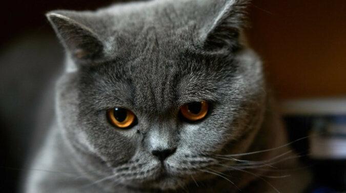 Kot czekał, aż dziewczyna właściciela wyjdzie z pokoju, i dopiero wtedy bardzo ładnie go przytulił. Wideo