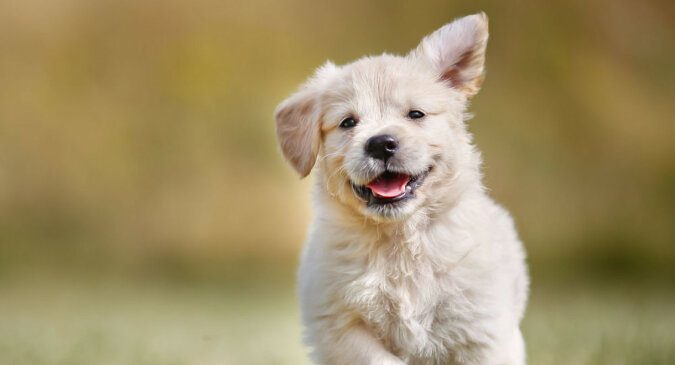 Pies prawie zemdlał, gdy zobaczył właścicielkę po długiej rozłące: wideo