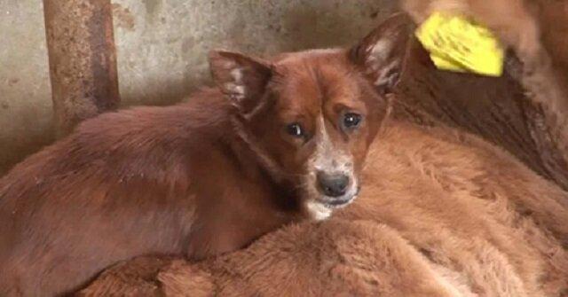 Pies zapłakał, gdy zdał sobie sprawę, że właściciele sprzedają jego najlepszego przyjaciela