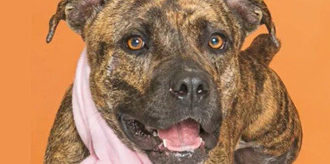Właściciel przez rok szukał zaginionego psa, a w Sylwestra zobaczył go w internecie