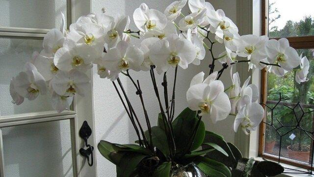 Od dziś będziesz mogła cieszyć się pięknymi kwiatami na co dzień. Domowy nawóz do storczyków
