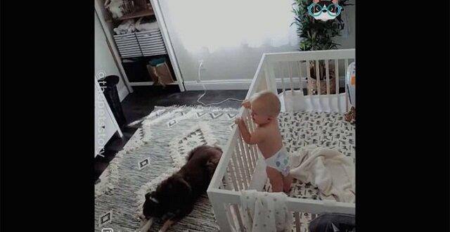 Niezwykle zabawne koty i psy! Filmik o cudownych opiekunach dla dzieci