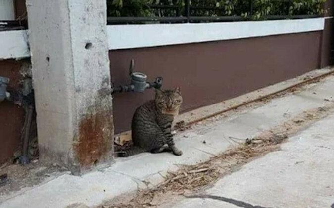 Mężczyzna przez kilka dni szukał kota. Kot wrócił z listem na szyi i z długiem