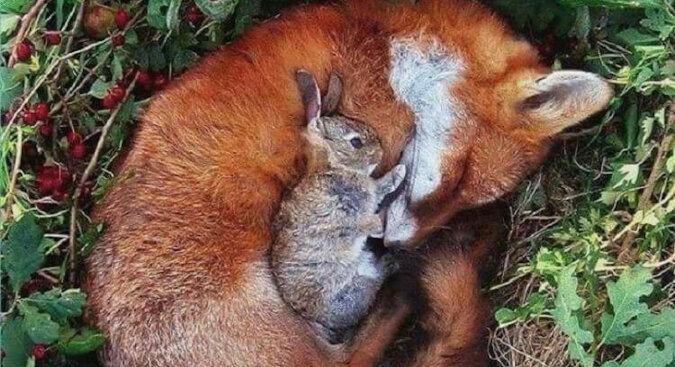 20 zdjęć najbardziej niezwykłej przyjaźni w świecie zwierząt