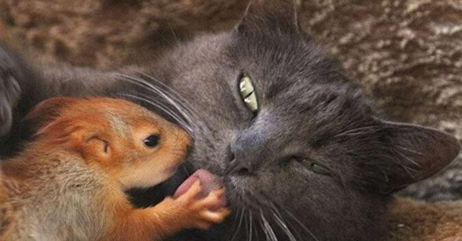 Kotka Pusha adoptowała cztery wiewiórki