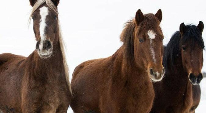 Ten koń wie jak dobrze odpoczywać, ale filmik bardziej przypomina reklamę szamponu