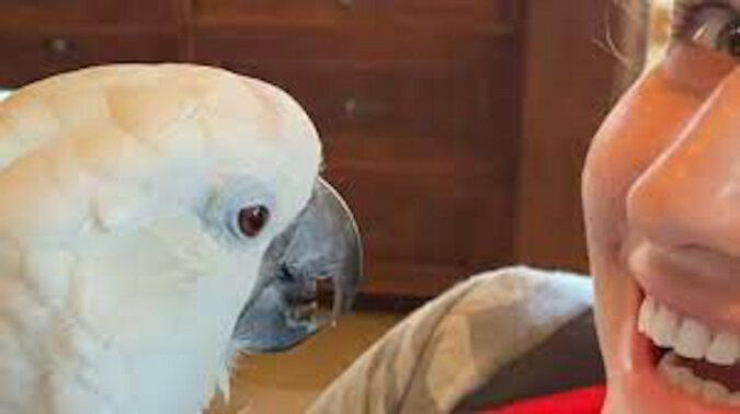Oto jak zareagowała papuga na nowego członka rodziny