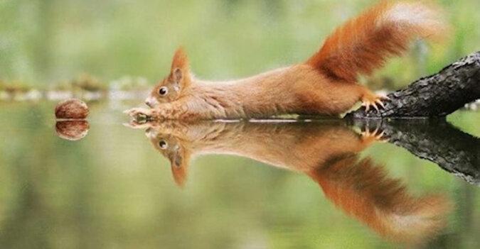 Niezwykle urocze zdjęcia dzikiej przyrody od słynnego austriackiego fotografa