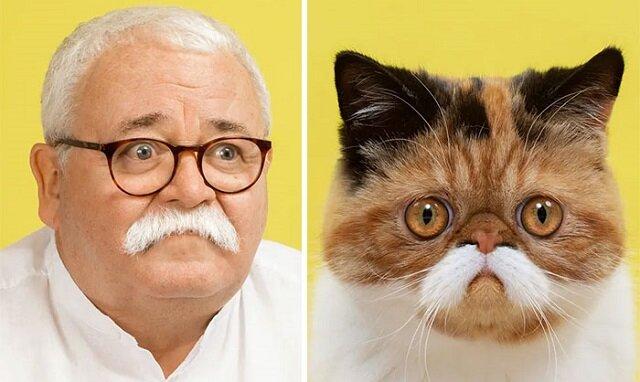 Fotograf udowodnił, że koty mają sobowtóry wśród ludzi. I odwrotnie