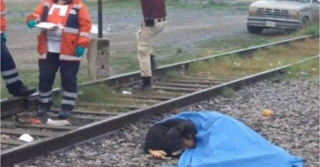 Pies stoi obok zmarłego właściciela i nawet ratownicy nie mogli odsunąć psa od ciała