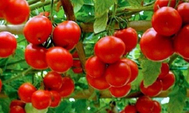 Domowy nawóz do pomidorów. Jak zrobić?