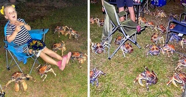 Dziesiątki ogromnych głodnych krabów zakłóciły rodzinny piknik w Australii