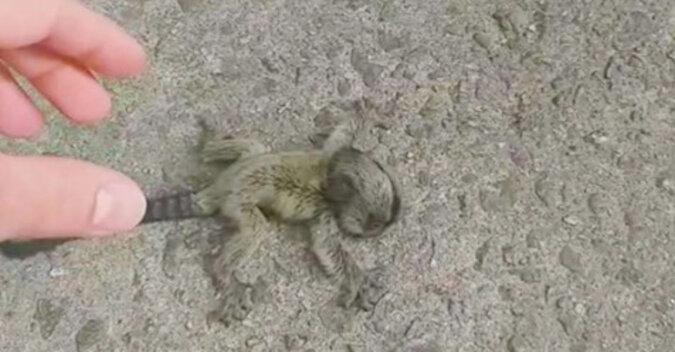 Mężczyzna uratował maleńkie stworzenie i oddał je mamie