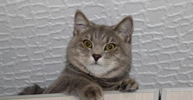 Właściciele oddali kota w dobre ręce, a dwa lata później kot wrócił do nich