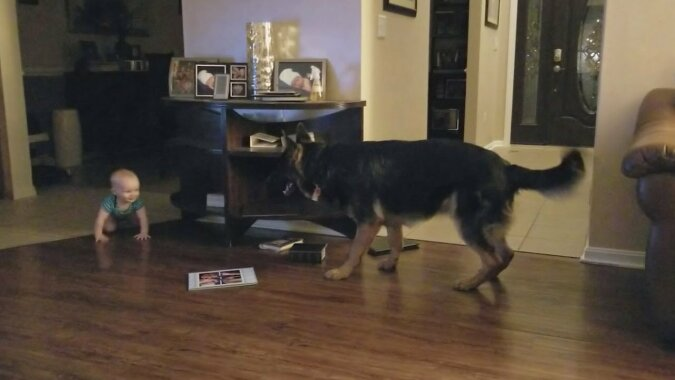 Jeśli w domu jest małe dziecko i pies, to należy oczekiwać na przykład tego…