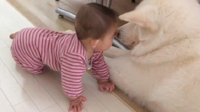 Najlepsi przyjaciele na świecie to śmieszne psy i słodkie dzieci. Wideo które poprawi humor