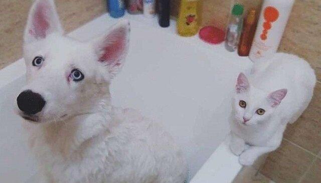 Właściciele szczeniaka chcieli zaadoptować dla niego kociaka ze schroniska, ale kotek już czekał na nich na ulicy