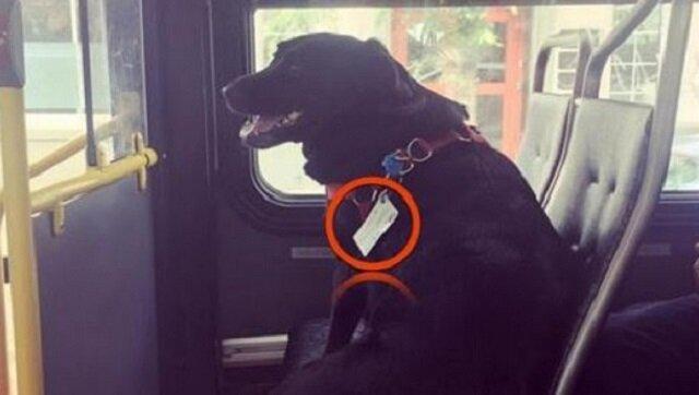 Pasażerowie byli oburzeni na widok psa samego w autobusie, dopóki nie zauważyli tego