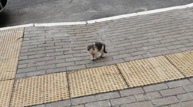 Historia kota, który każdego ranka biegł do ludzi w nadziei, że go pokochają